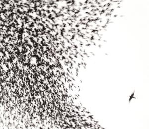 Wilco- Sky Blue Sky (2007)